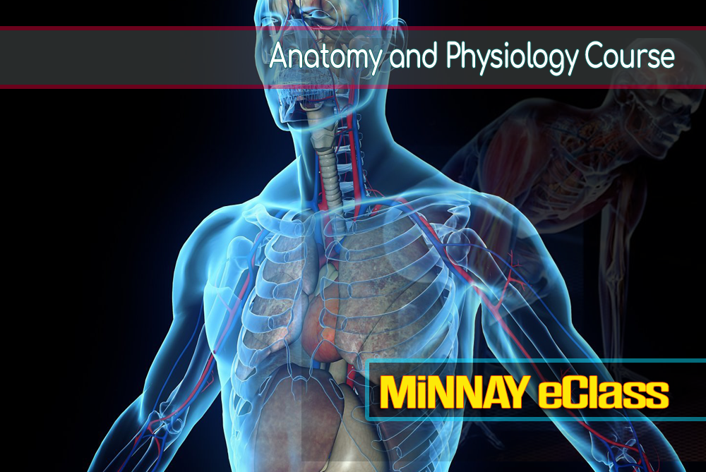 Anatomy and Physiology Online Course